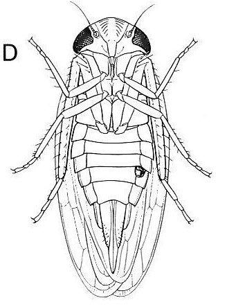 Sketch of an insect