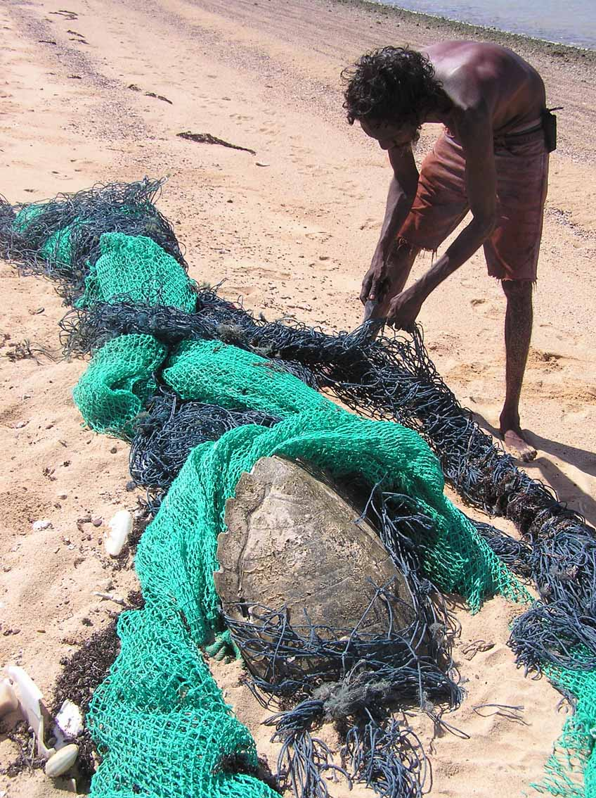 During a beach cleanup, an Indigenous ranger finds a ghostnet with a turtle entangled.Picture: GhostNets Australia.