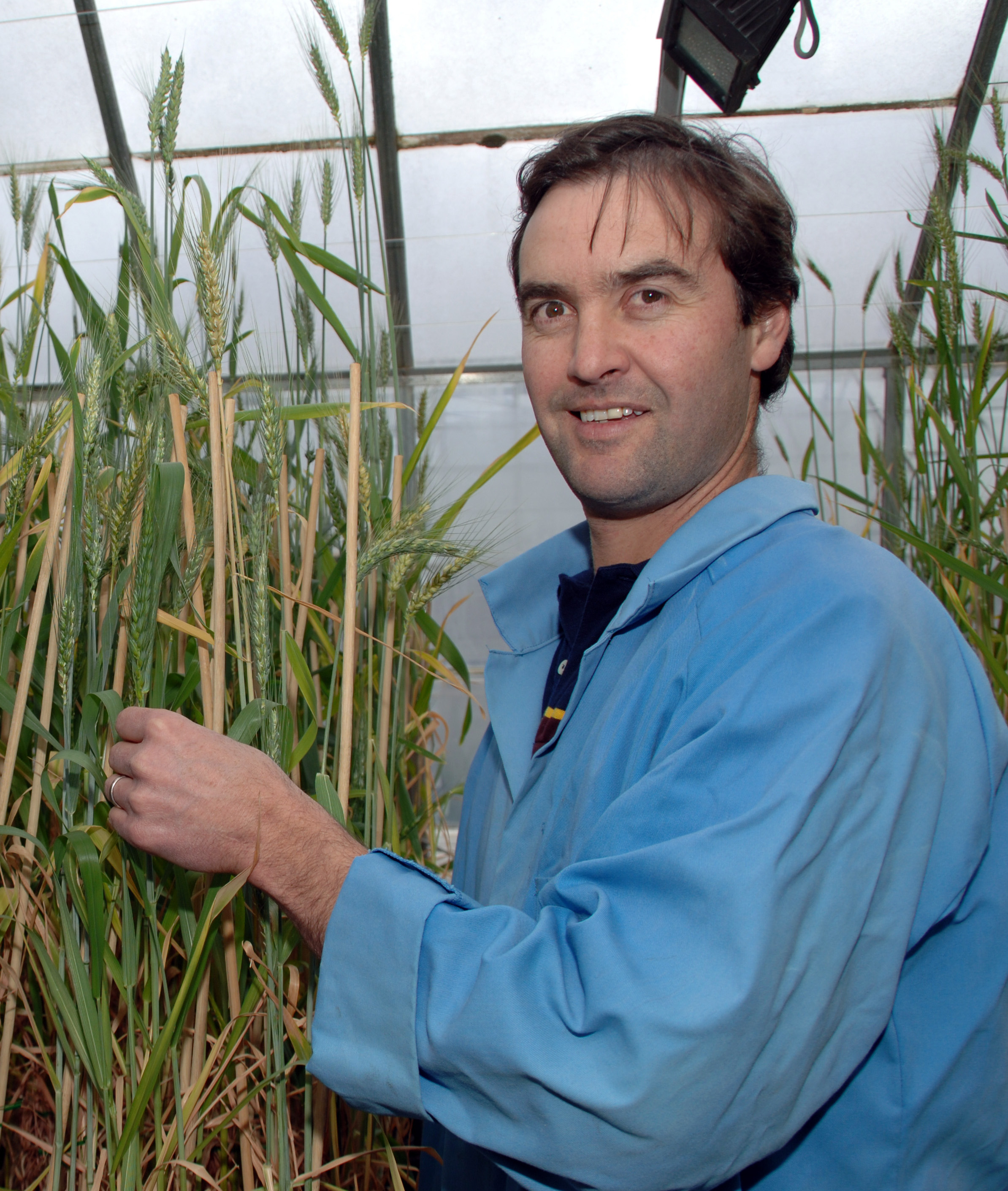 A man in a blue lab coat looking at a wheat plant in a pot