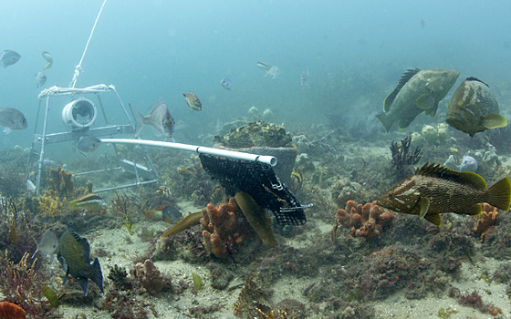 Smile! A BRUV (Baited Remote Underwater Video) system filming fish on the sea floor. Image: NERP.