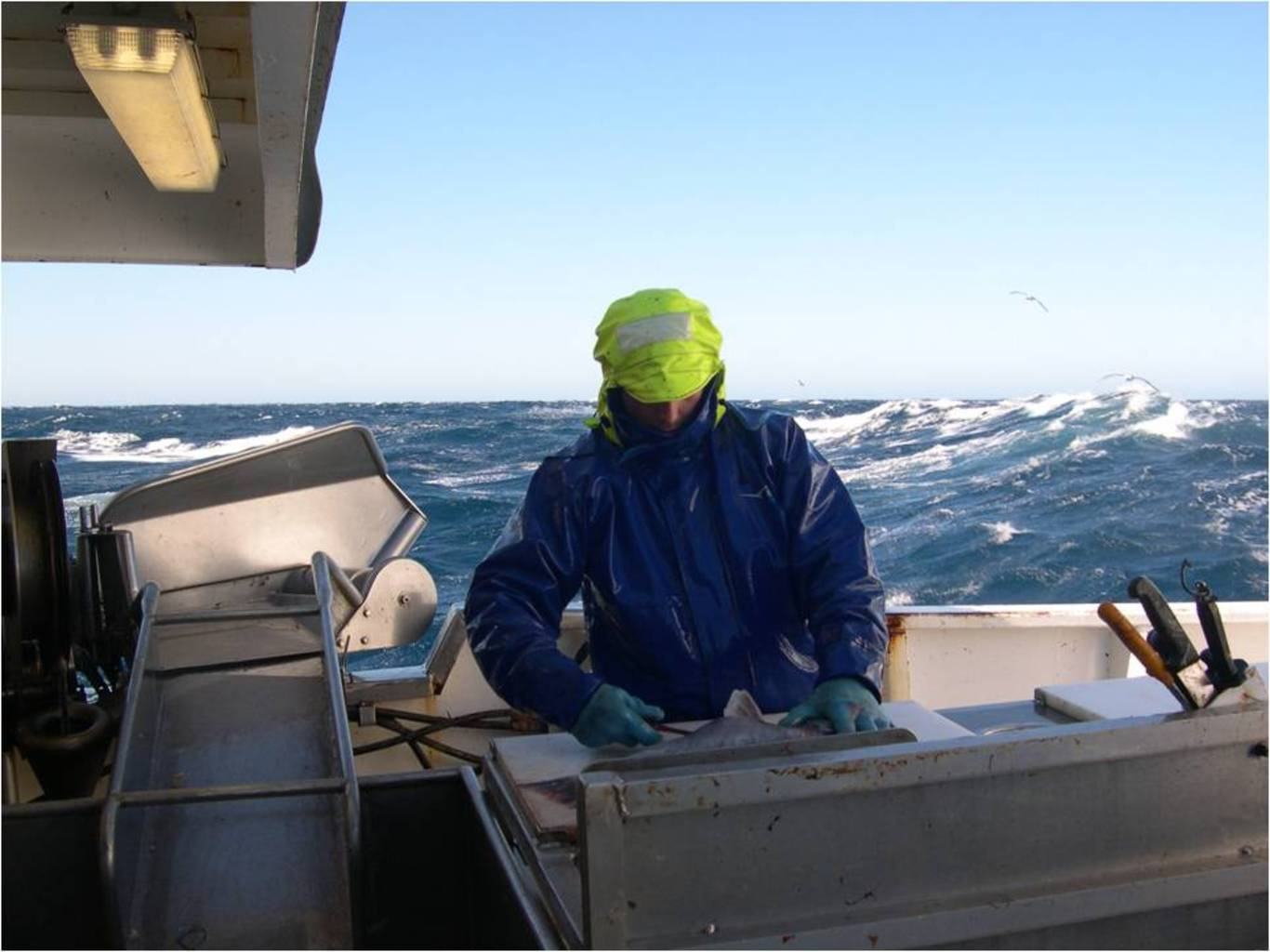 Just another day at sea tagging dogfish. Image: Ross Daley.