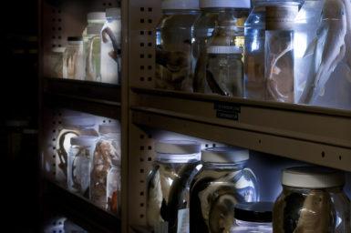 Shelf full of glass specimen jars
