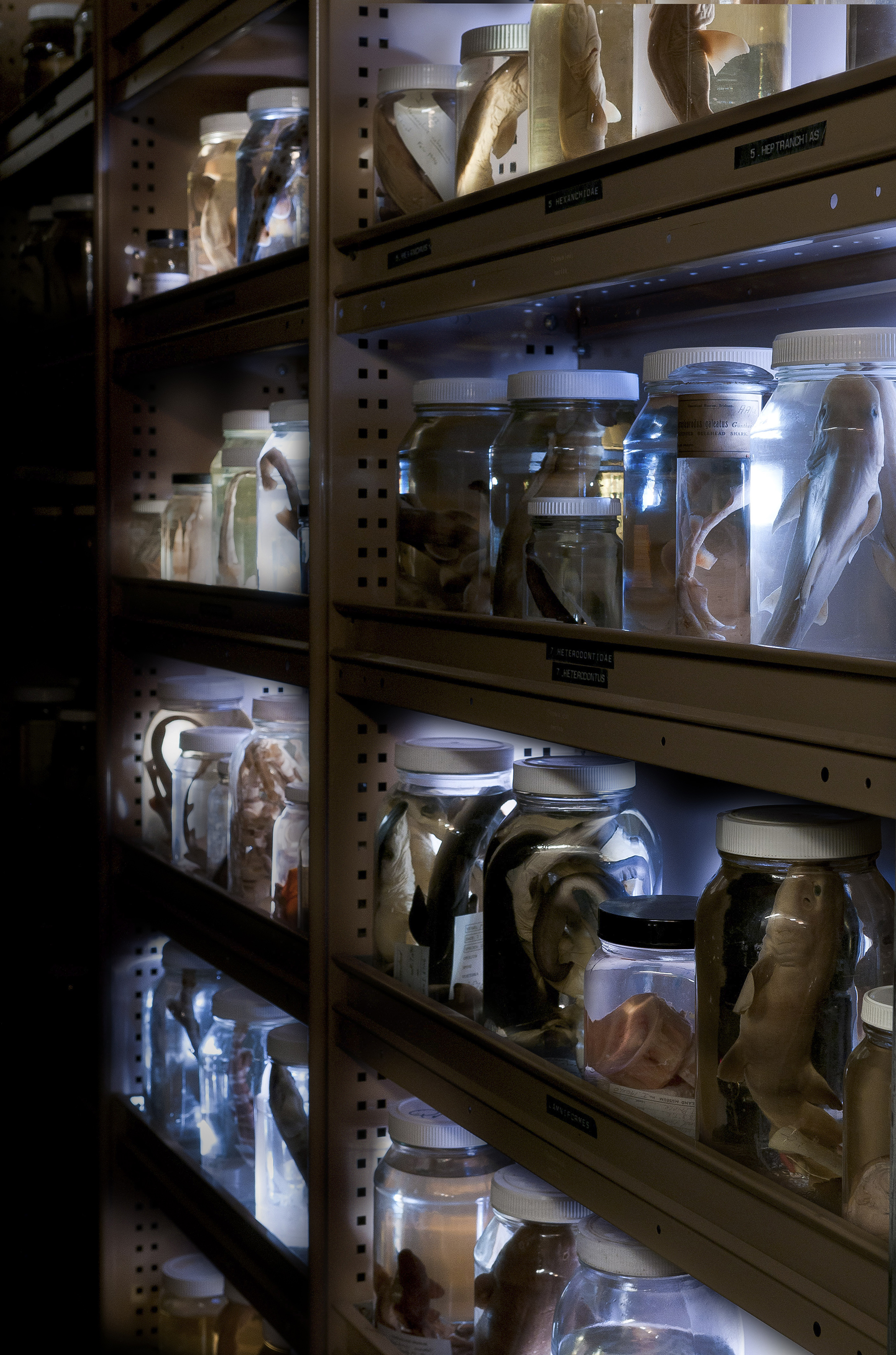 Shelf full of glass specimen jars