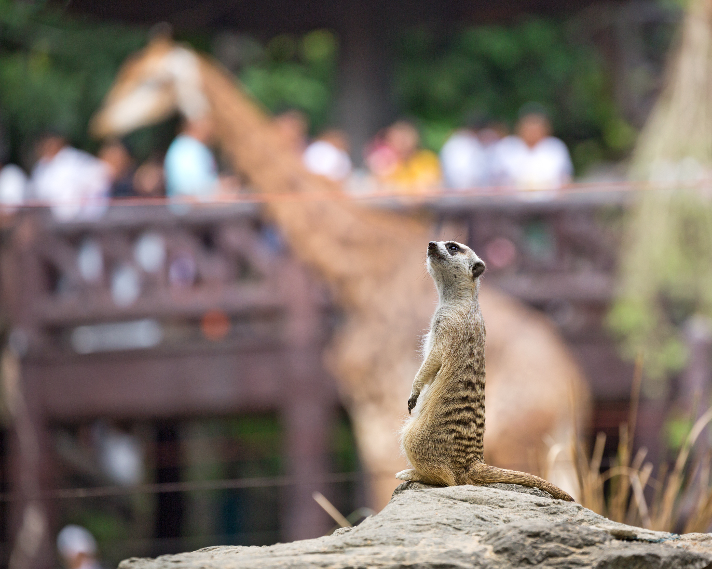 Zoos are a great place to visit but we don't want Australia to become one. Image: Shutterstock.