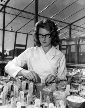 A woman in a lab coat working with plants in a glasshouse