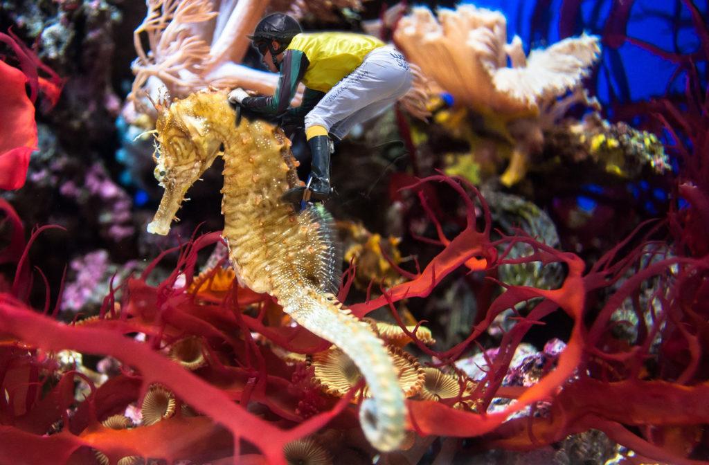 Jokey riding a seahorse