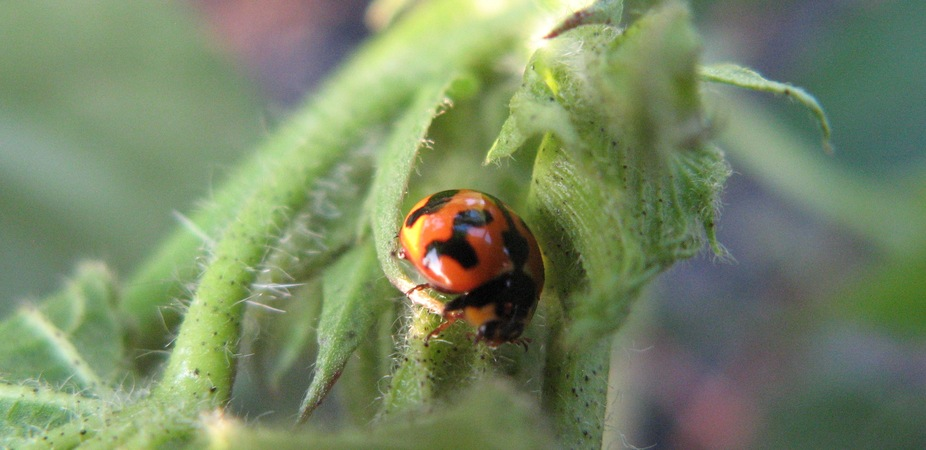 close-up of a ladybird on a plant