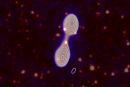 An example of a Radio Galaxy Zoo composite image showing the radio jets as contours with a central core galaxy in infrared.