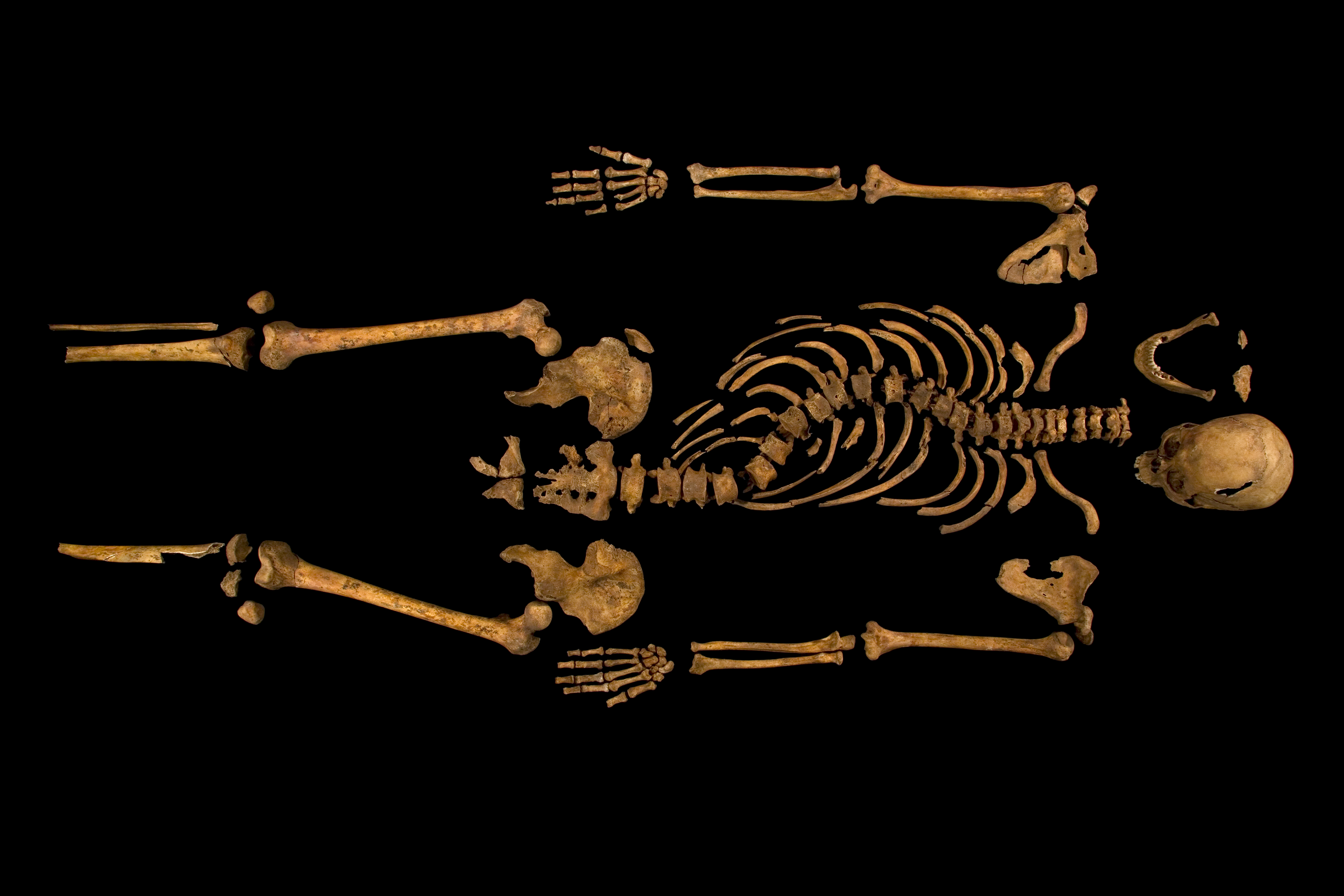 The complete skeleton showing the curve of the spine. Image: University of Leicester