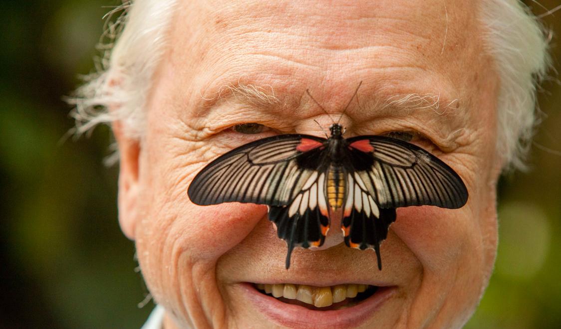 Head shot David Attenborough