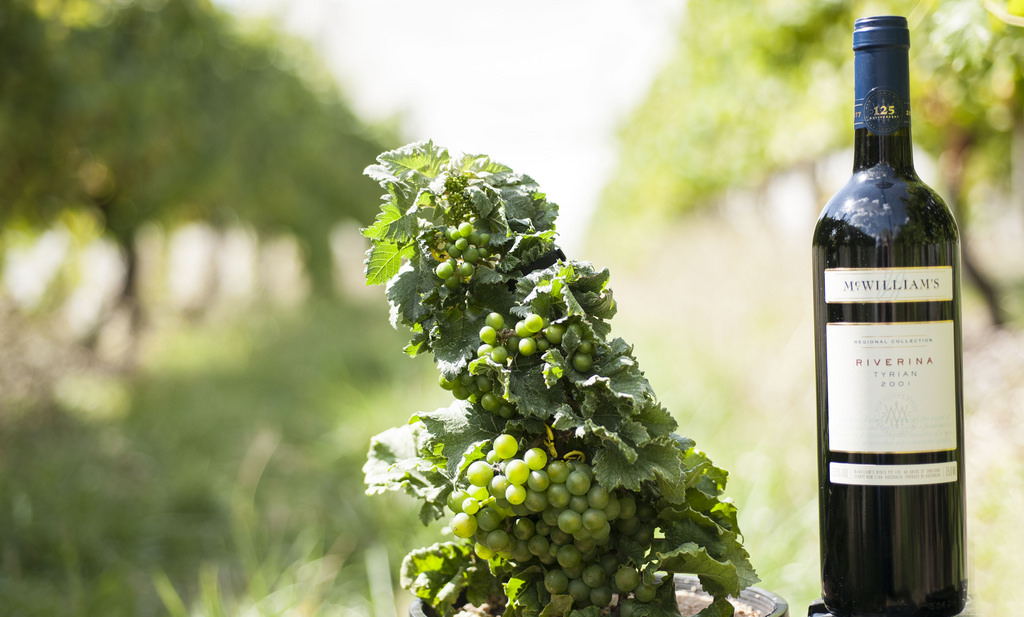 The microvine responsible for McWilliam's vintage Tyrian.