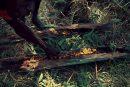 sugarbag honey in tree hollow