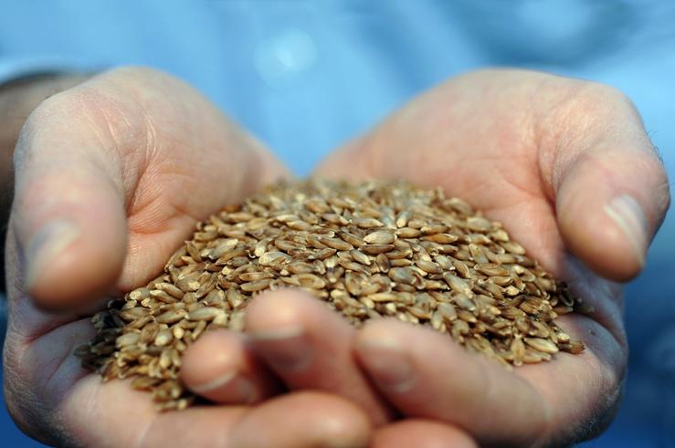 BARLEYmax grain