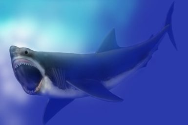Megaloon