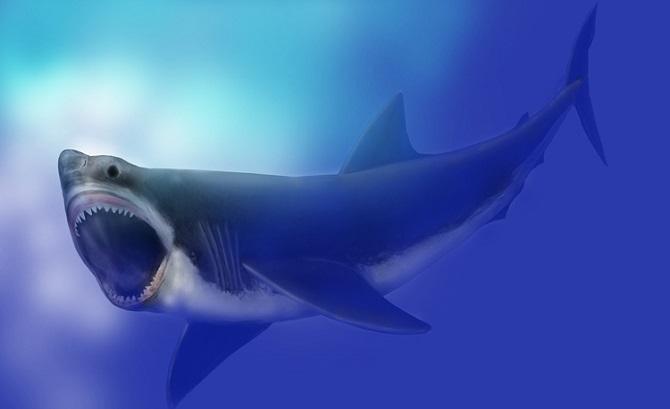 Megalodon myth: 3m shark eaten by even bigger shark? - CSIROscope