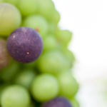 grapevineberries