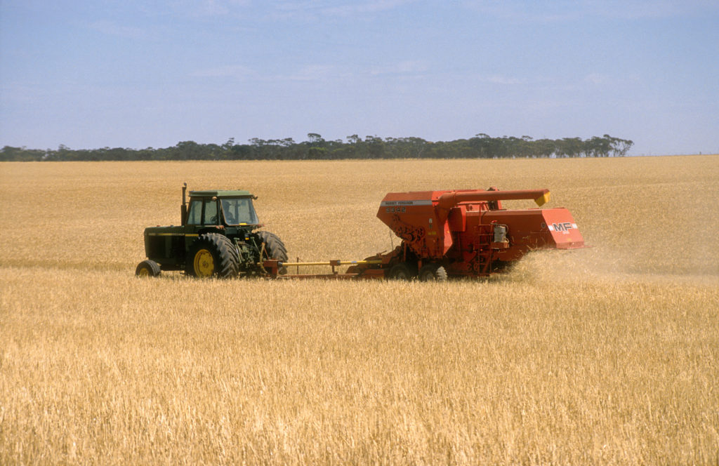 Wheat harvest in SA