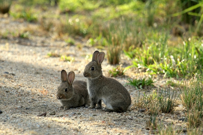 A picture of rabbits.
