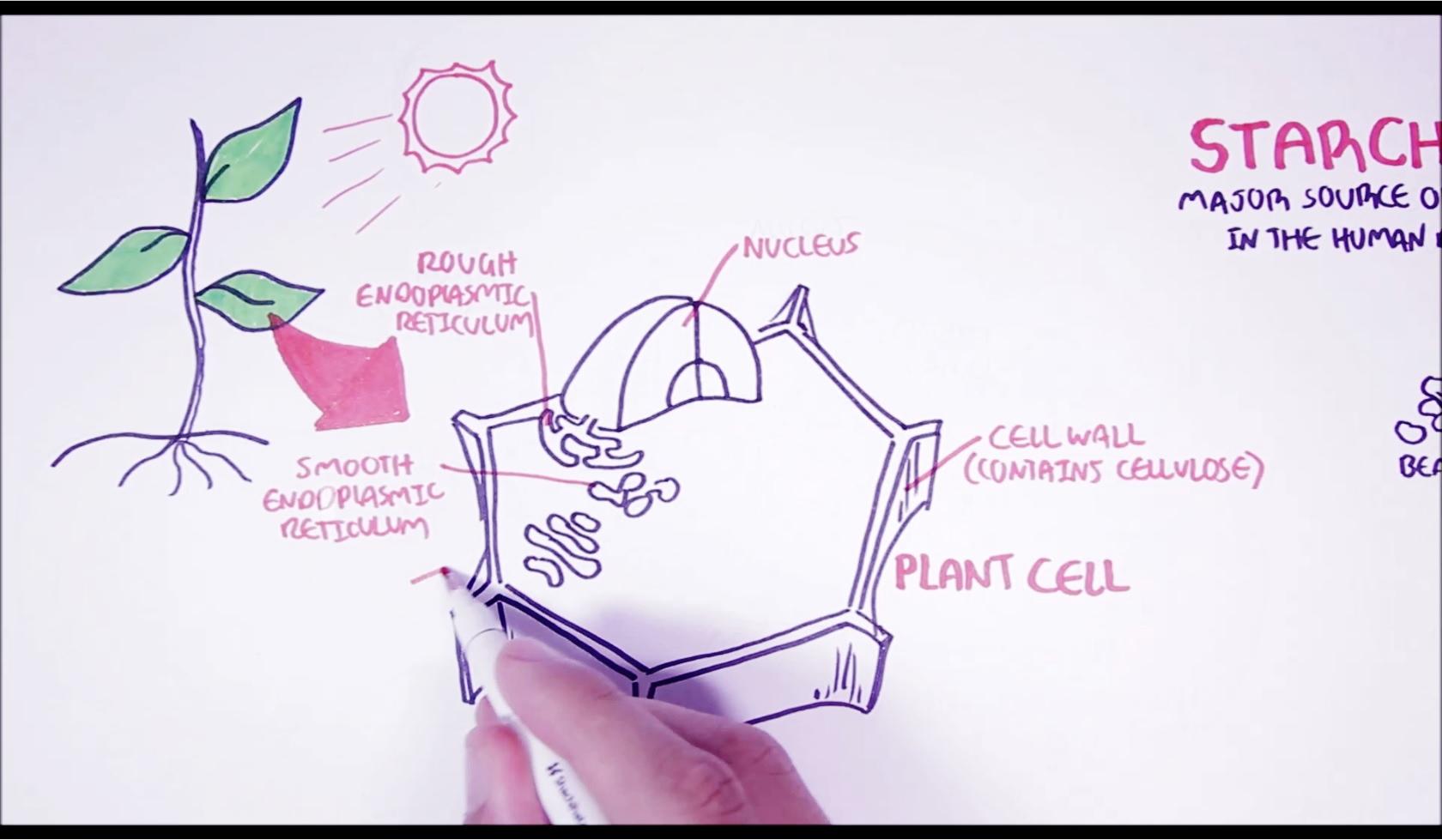 Plants eat sun, plants make giant cell. Simple.