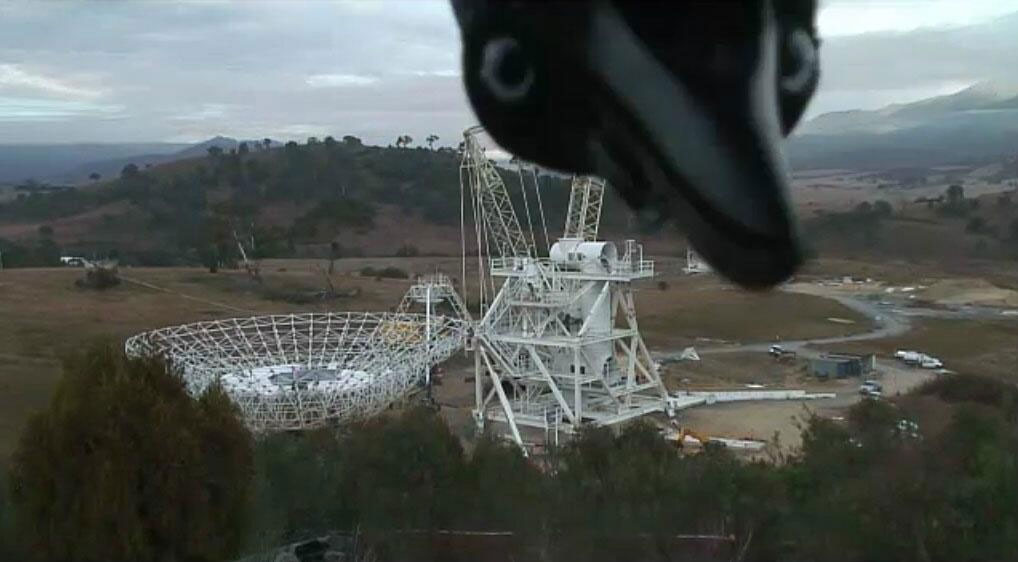 FAVOURITE PHOTOBOMB: During construction of DSS35, our cameras caught this image which went viral online.