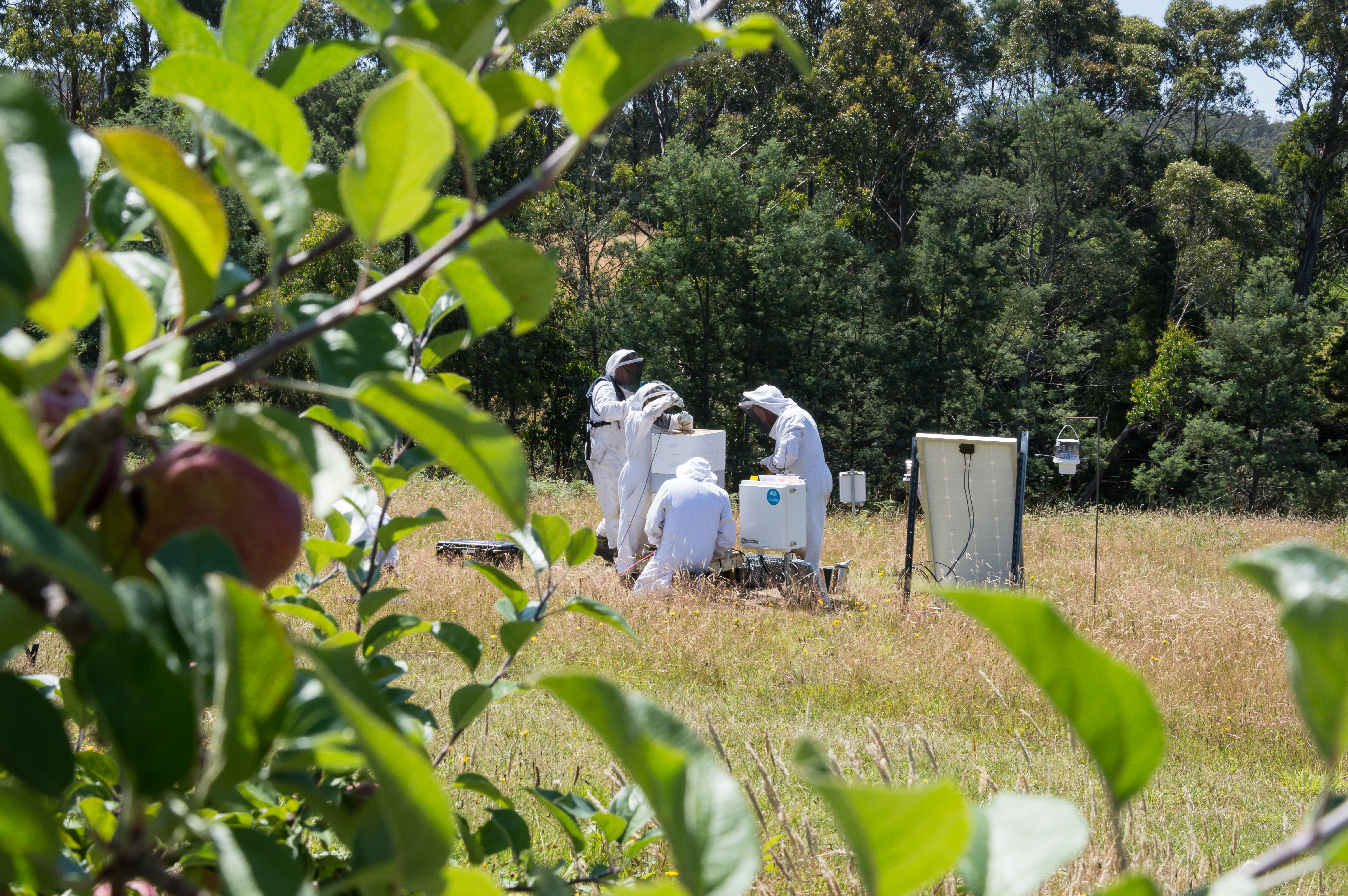 Our team gathering data from a bee hive in the Huon Valley, Tasmania