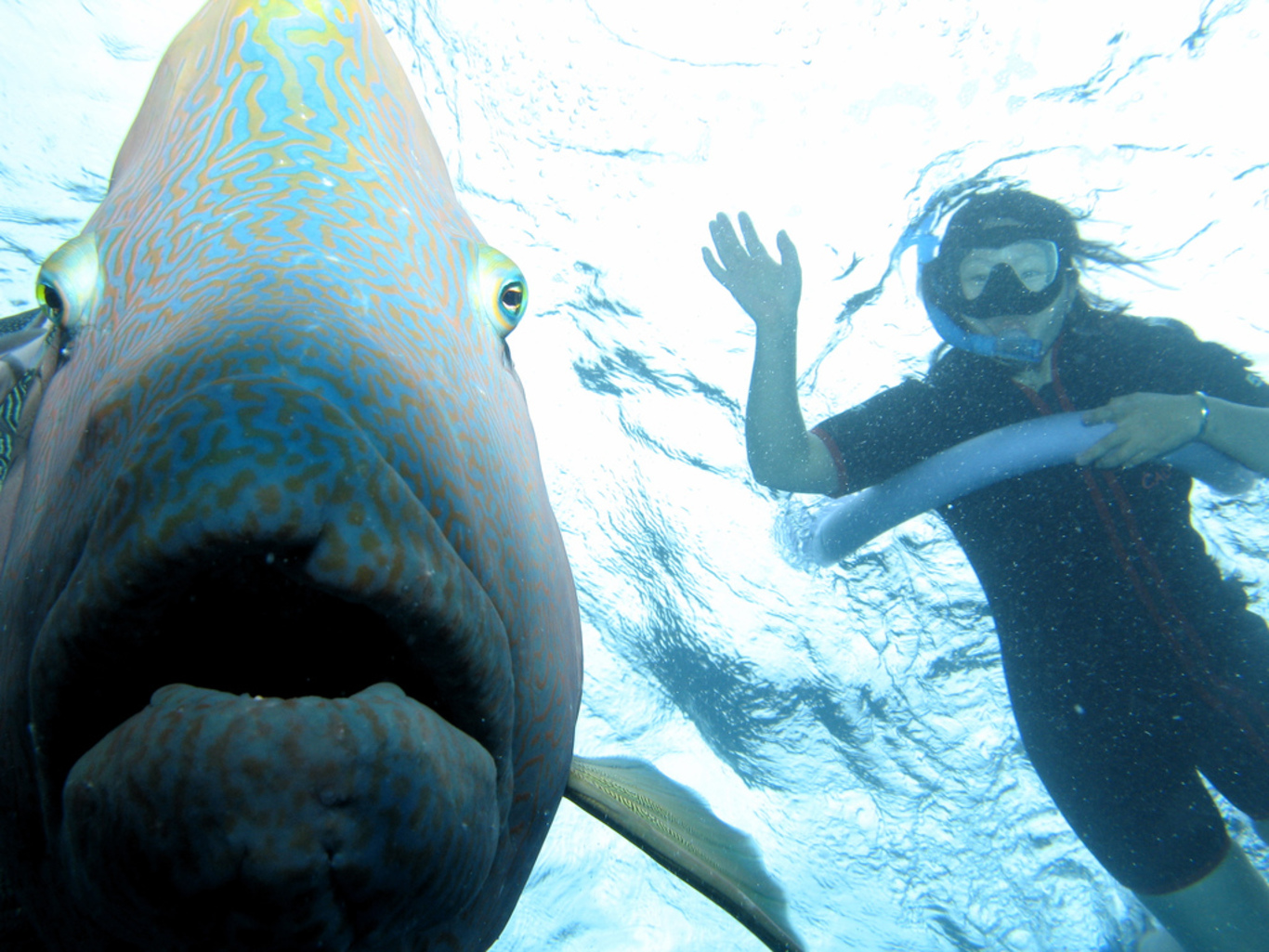 Smile for the camera – diving the Great Barrier Reef. Brian Costelloe/Flickr, CC BY-NC