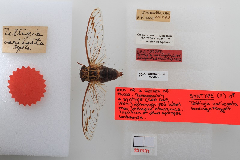 One of the millions of samples of the Australian National Insect Collection.
