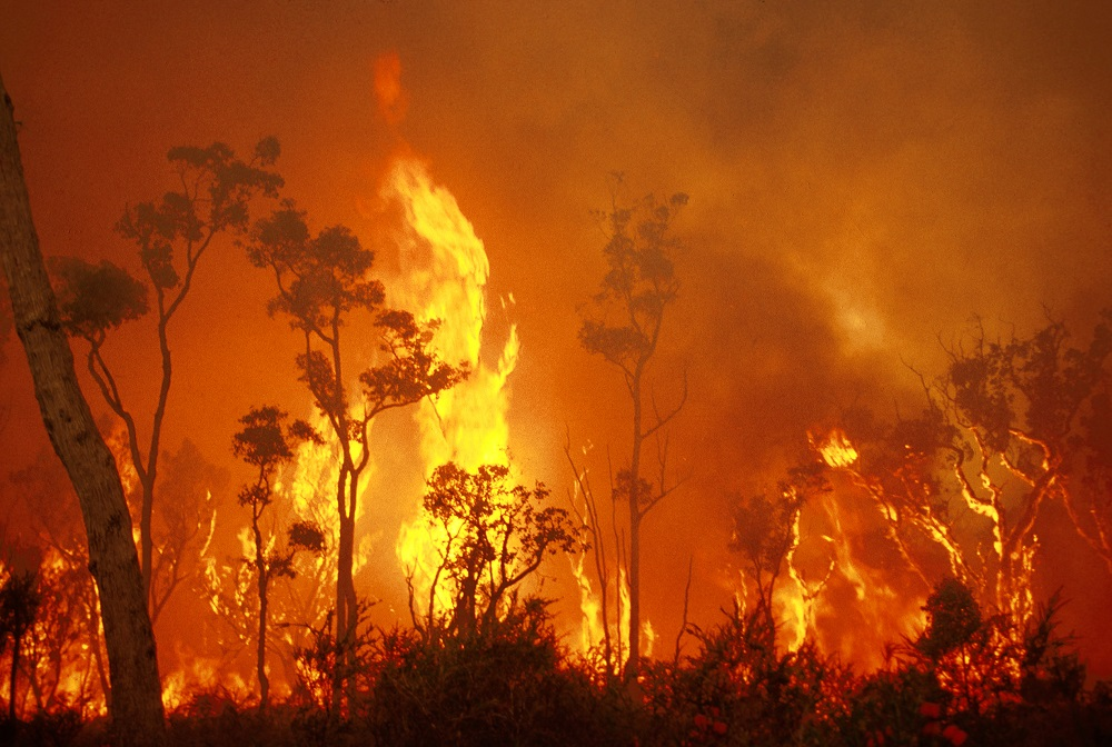 A picture of a bushfire.