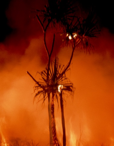 A picture of bushfire.
