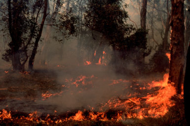 bushfire burning low to the ground