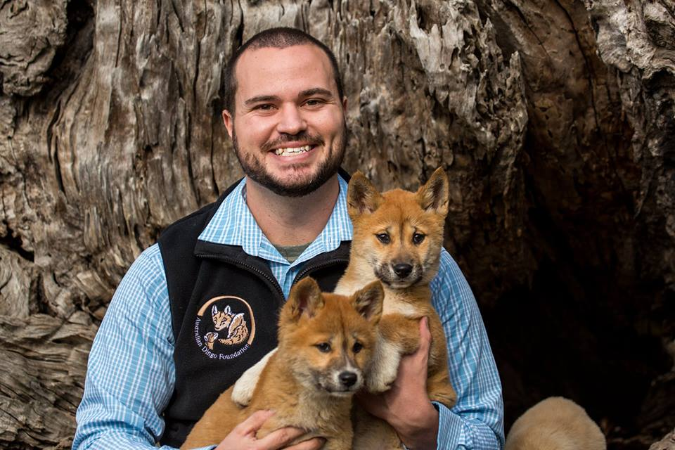 A picture of a man holding two dingo pups