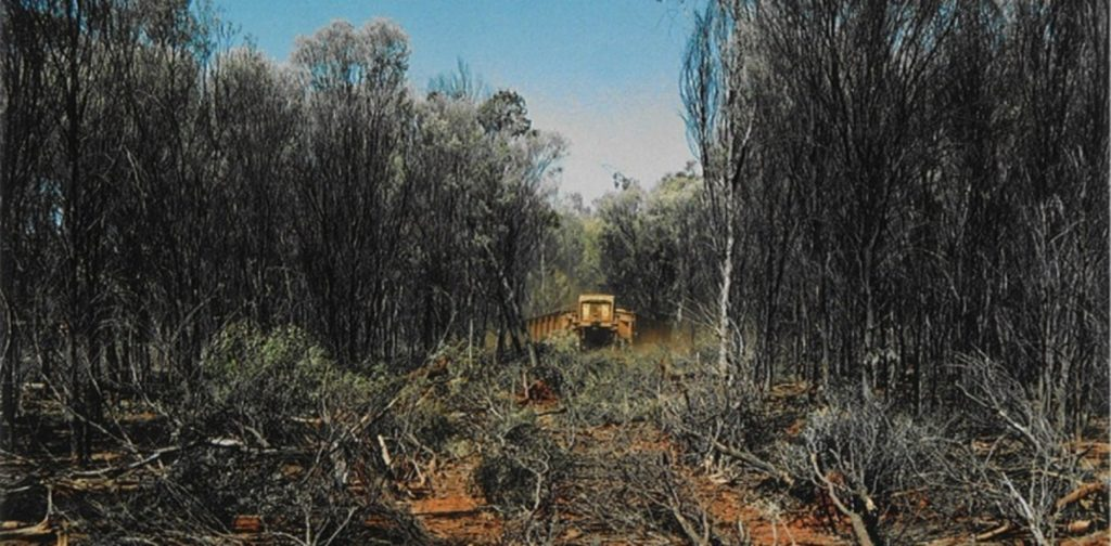 Clearing mulga woodland in Queensland to open up land for cattle during drought. M. Venterriven