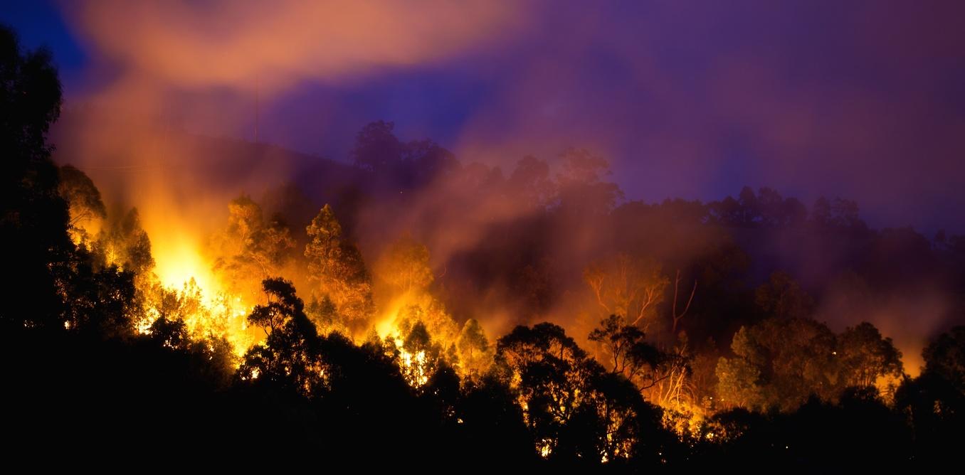 bushfire burning at night through dense bushland