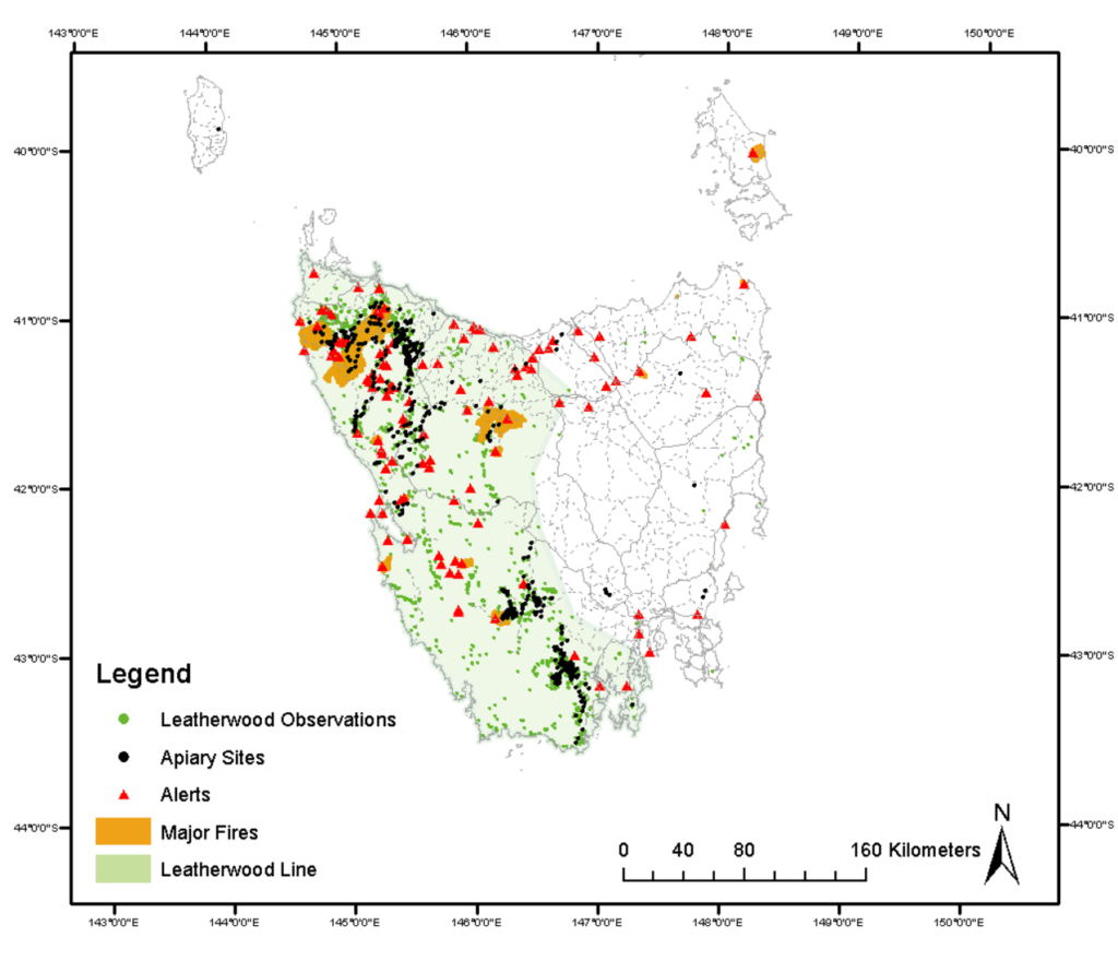 Distribution of leatherwood in western Tasmania in relation to major and minor fires. Image credit - author provided