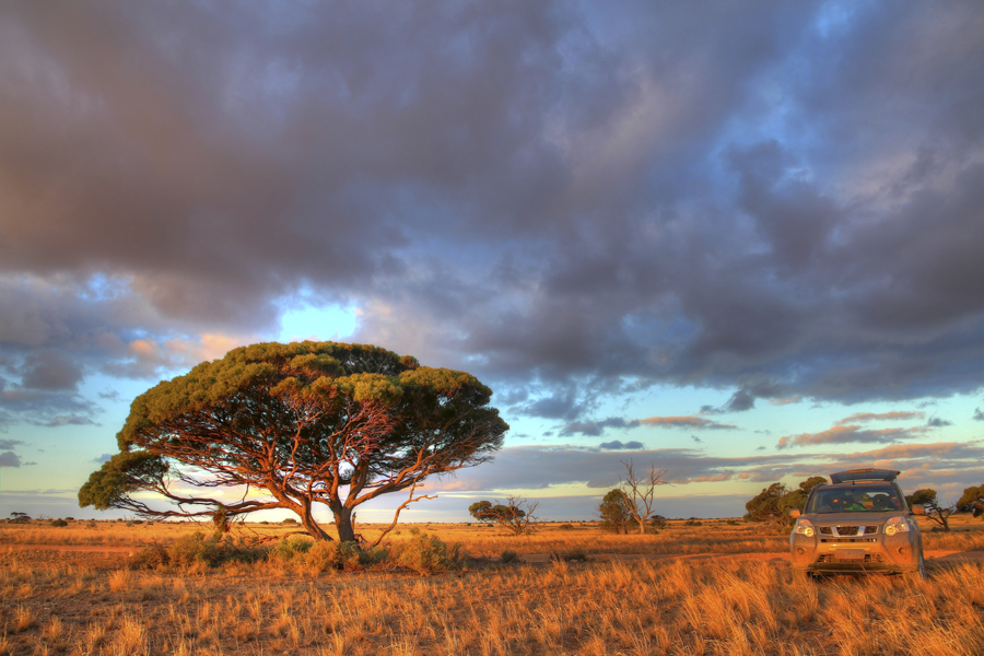 Tree and 4 wheel drive vechicle in outback landscape