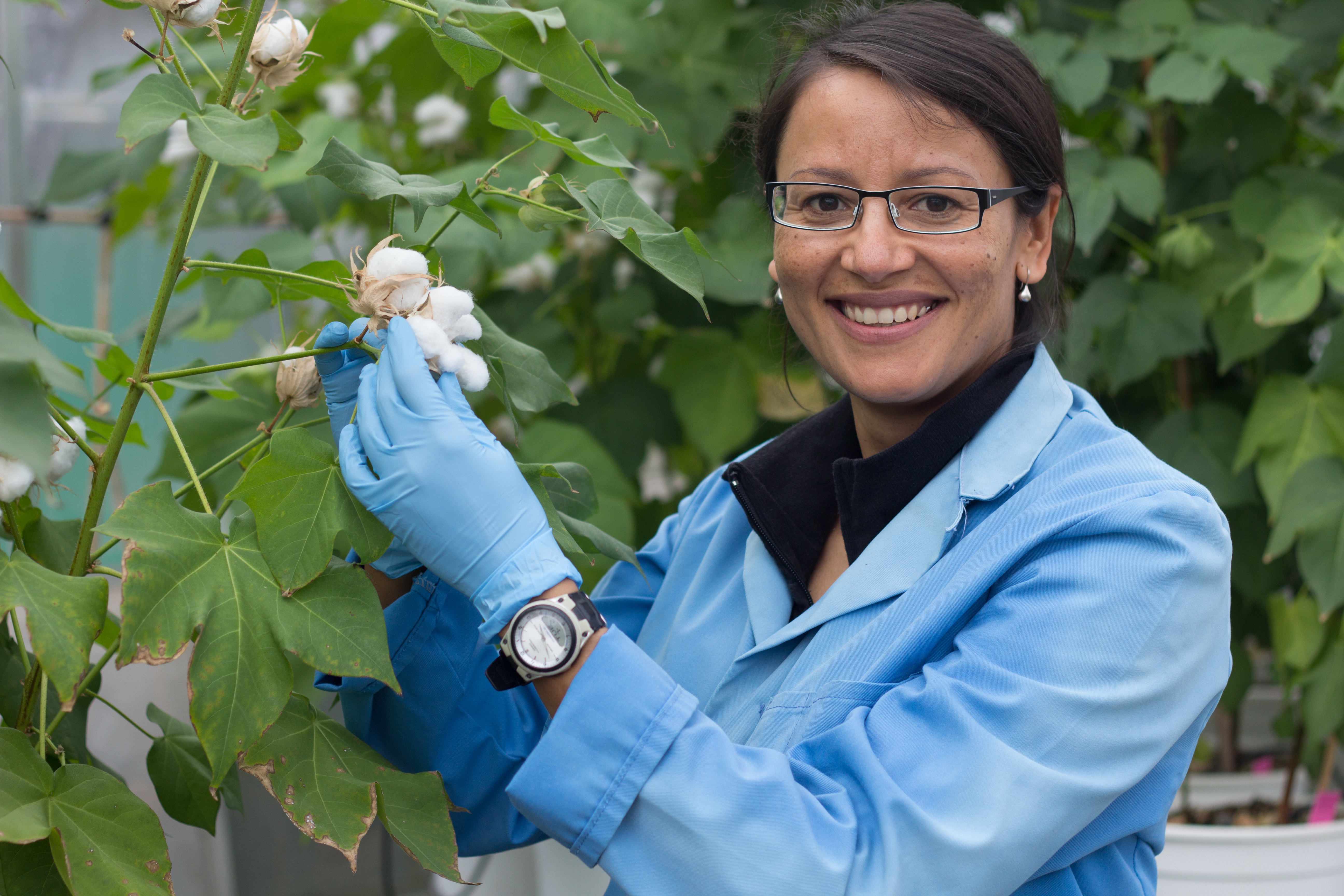 Colleen MacMillan with cotton plant