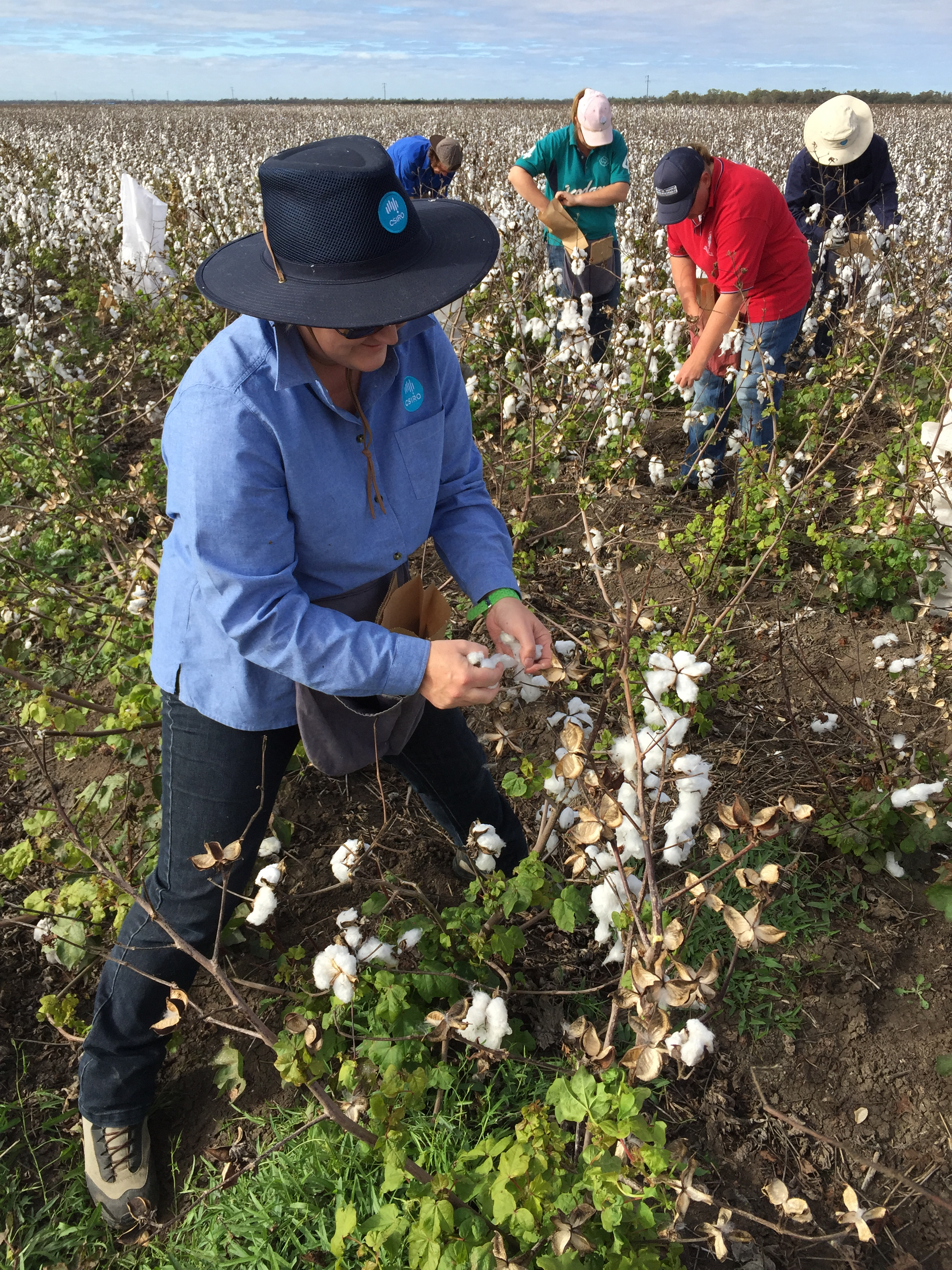 Heather Campbell working with team on cotton field.