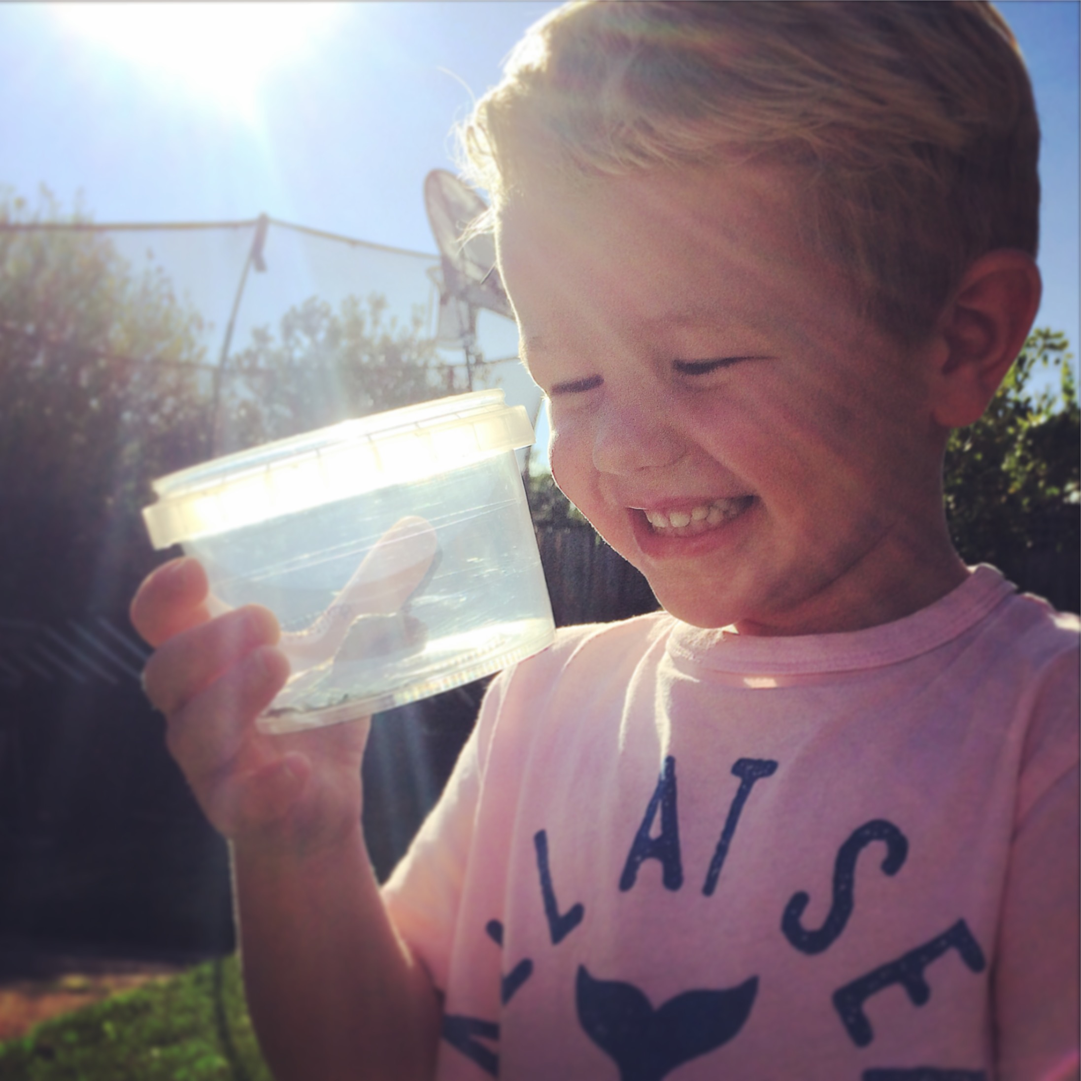A young boy looking at a bug in a container