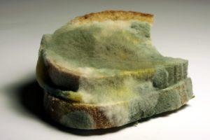 Mouldy bread.