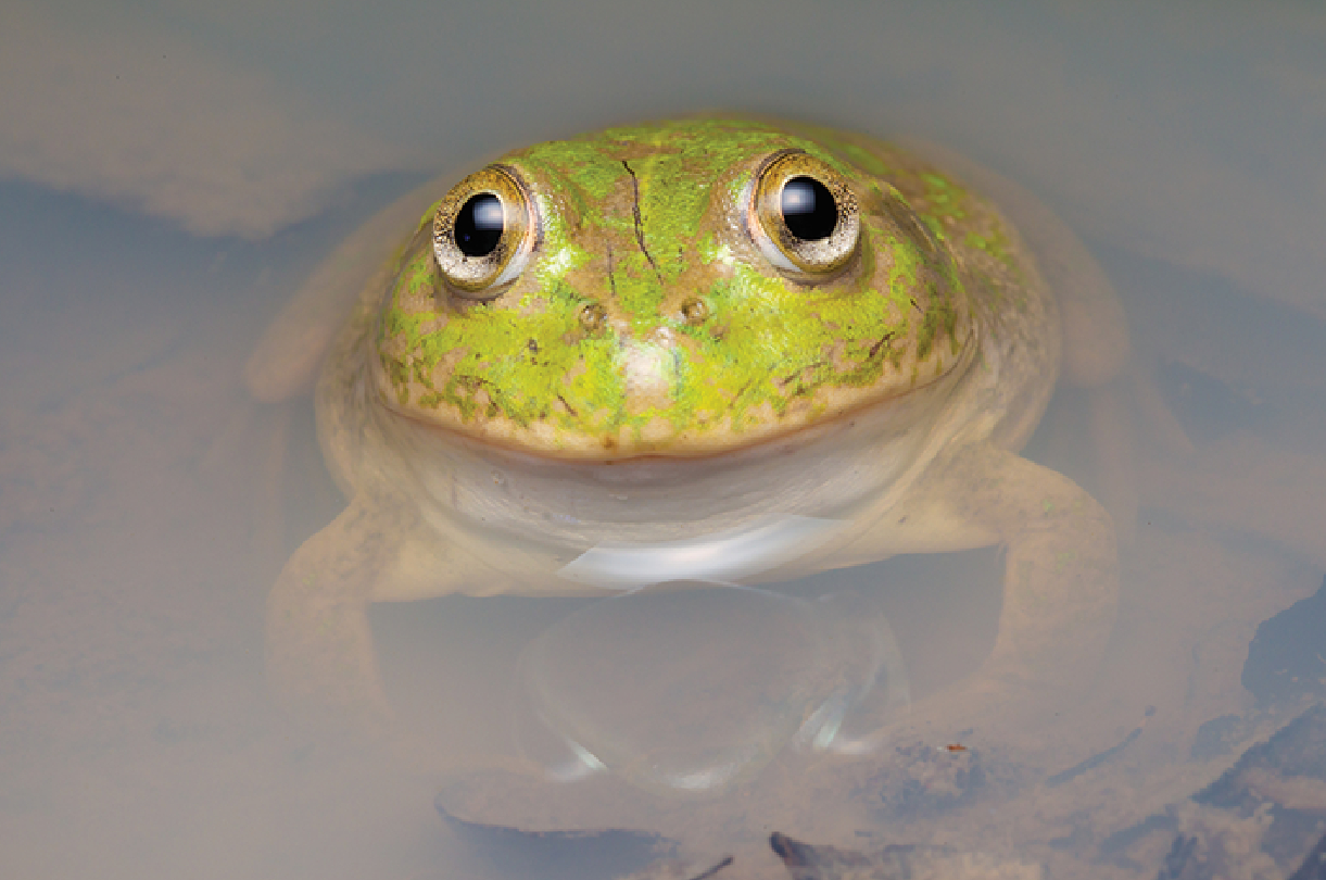 a frog poking out of the water