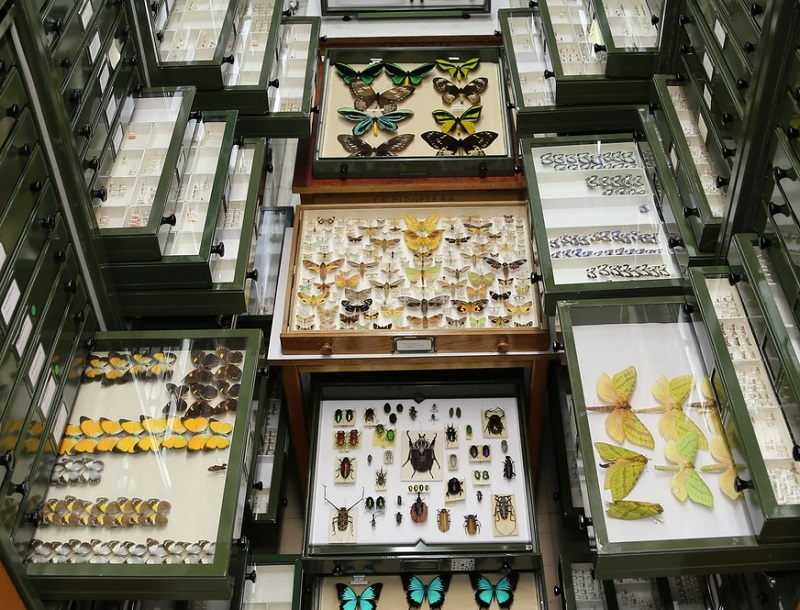 Some of the many yet-to-be named species in the Australian National Insect Collection. Image credit - Alan Landford