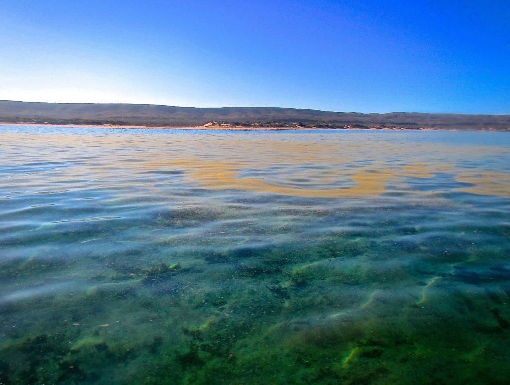 A not-so-Turquoise-Bay at Ningaloo National Park. Image - Coral Reefs.