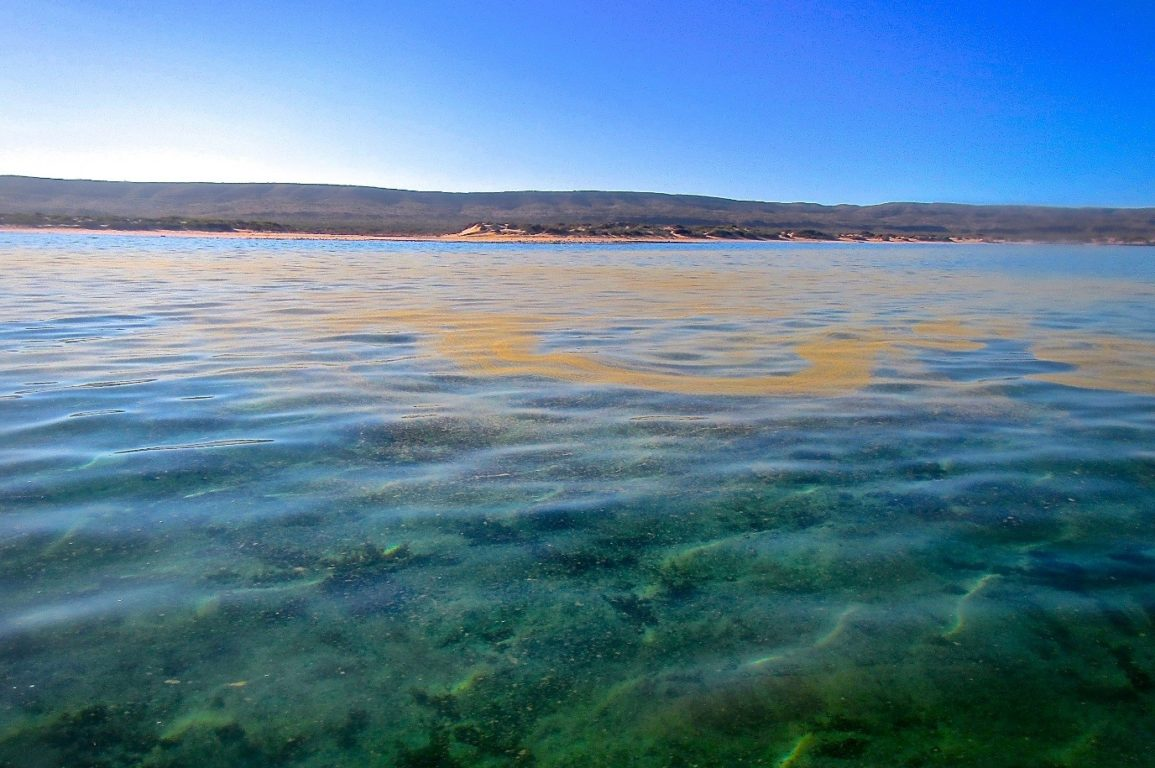 The not-so-Turquoise-Bay at Ningaloo National Park. Image - Coral Reefs.