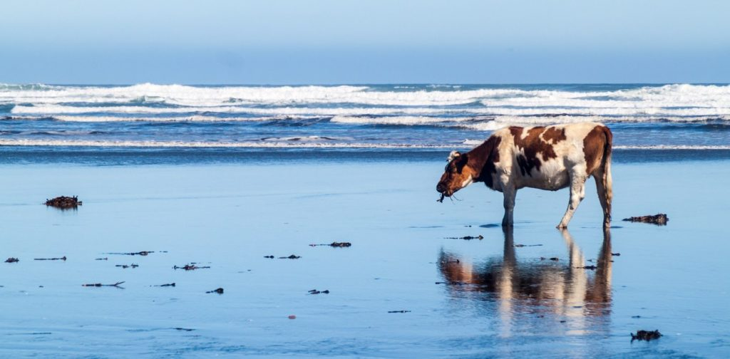 This cow has the right idea. Cow image from www.shutterstock.com