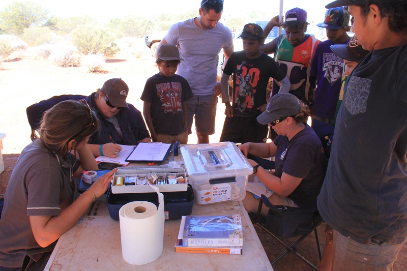 Scientists and park rangers work with Indigenous students and Elders to track wildlife in Matuwa Kurrara Kurrara Indigenous Protected Area (IPA) during Science Pathways school trip in Western Australia.