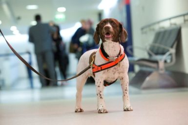 Data + sniffer dogs = secure borders