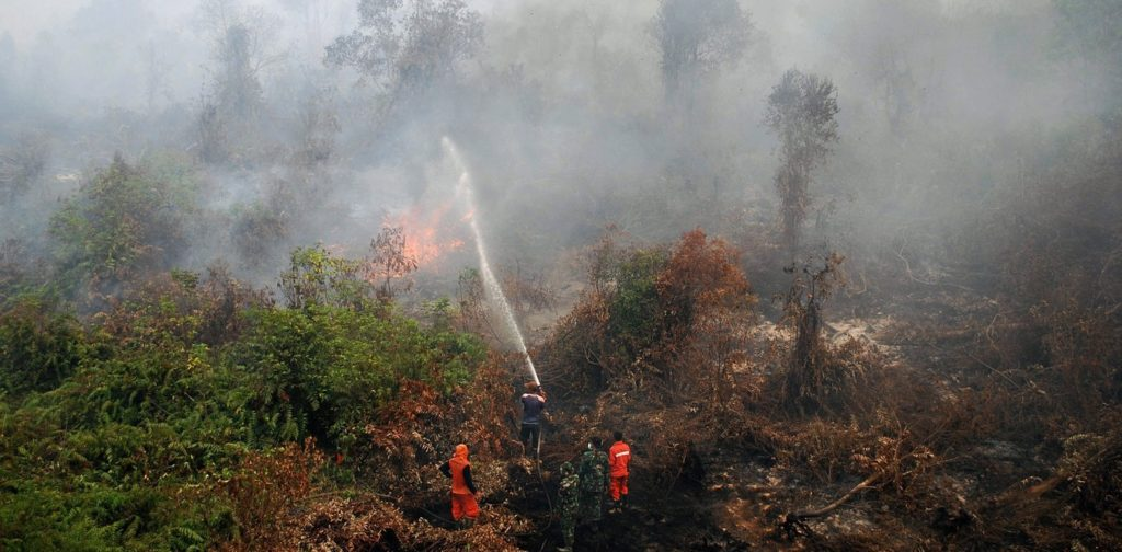 Firefighters fight forest fire in Indonesia, triggered in part by El Nino. EPA/RONY MUHARRMAN