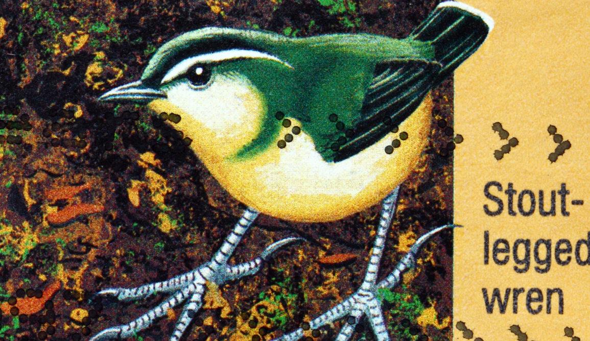 Immortalised on a stamp, New Zealand's stout-legged wren went extinct in the 1990s. Boris15/www.shutterstock.com