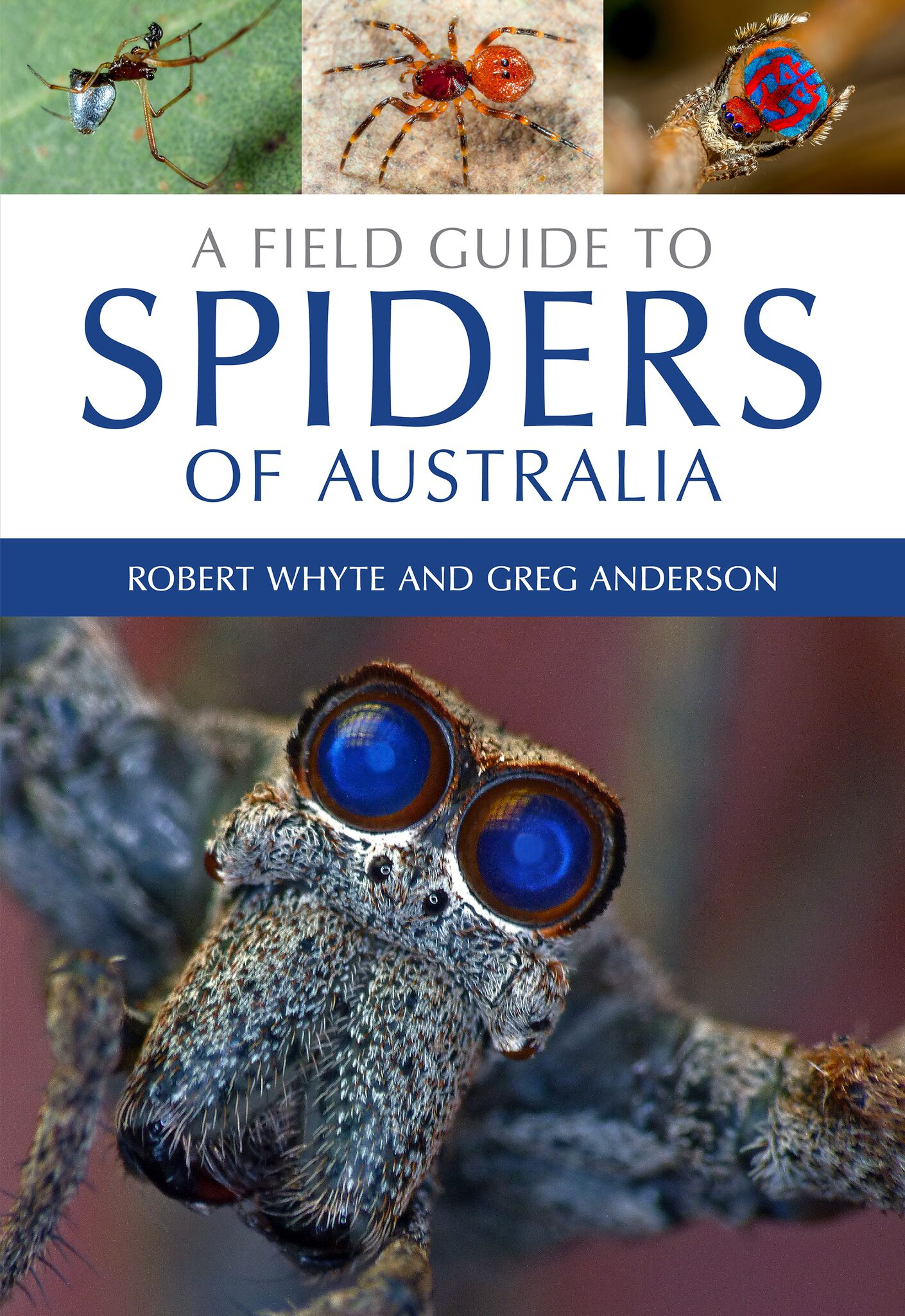 meet the families a field guide to spiders of australia is here