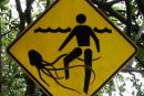 Jellyfish warning signpost at Cape Tribulation beach in Queensland, Australia Image via TydeNet/Wikipedia